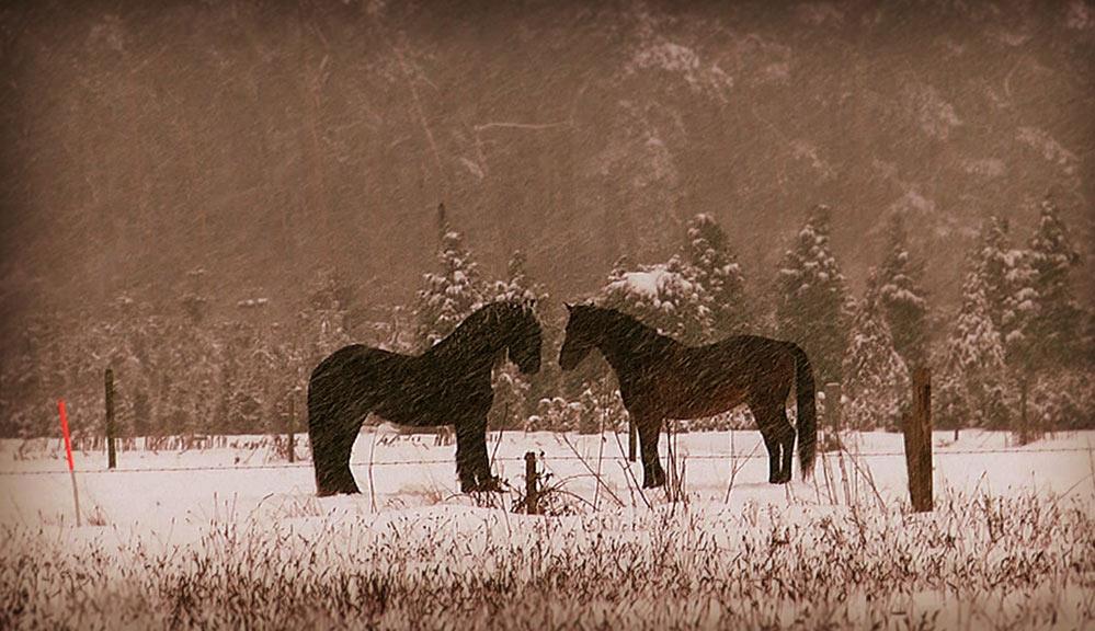 Documentaire productie paarden